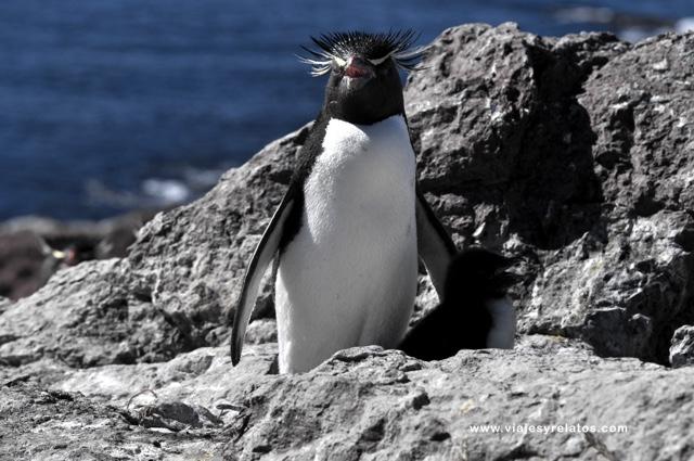 pinguino-2